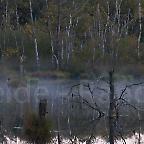 Foto: Pietzmoor Lüneburger Heide